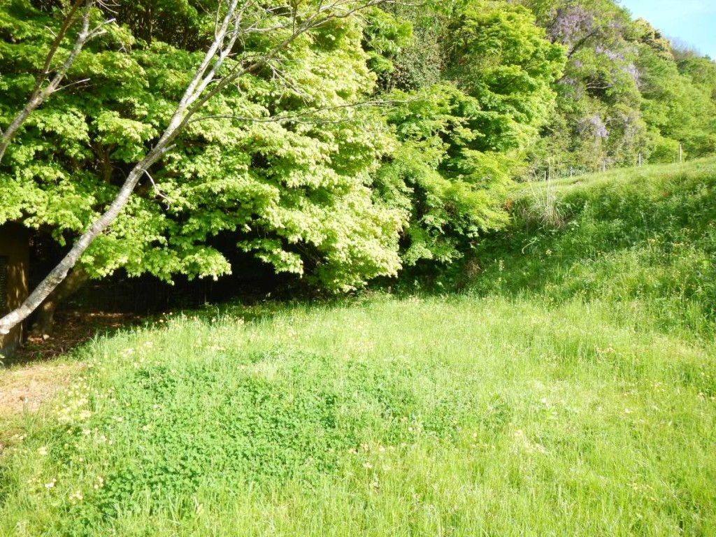 白川の新緑