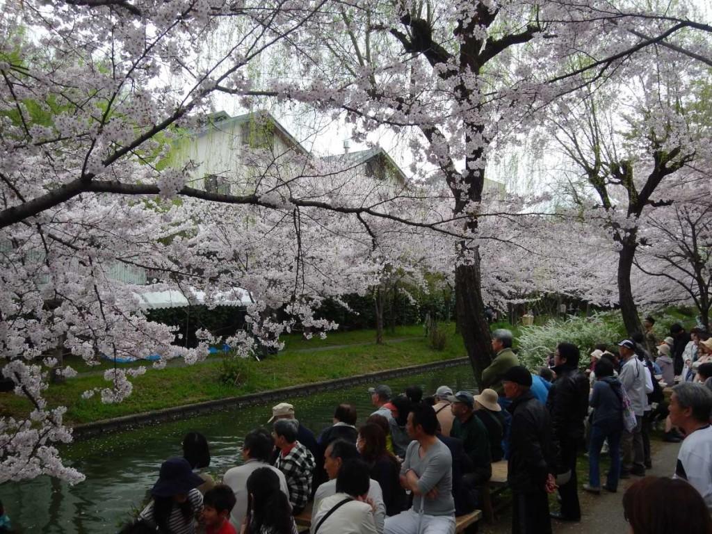 桃山語り部桜まつり