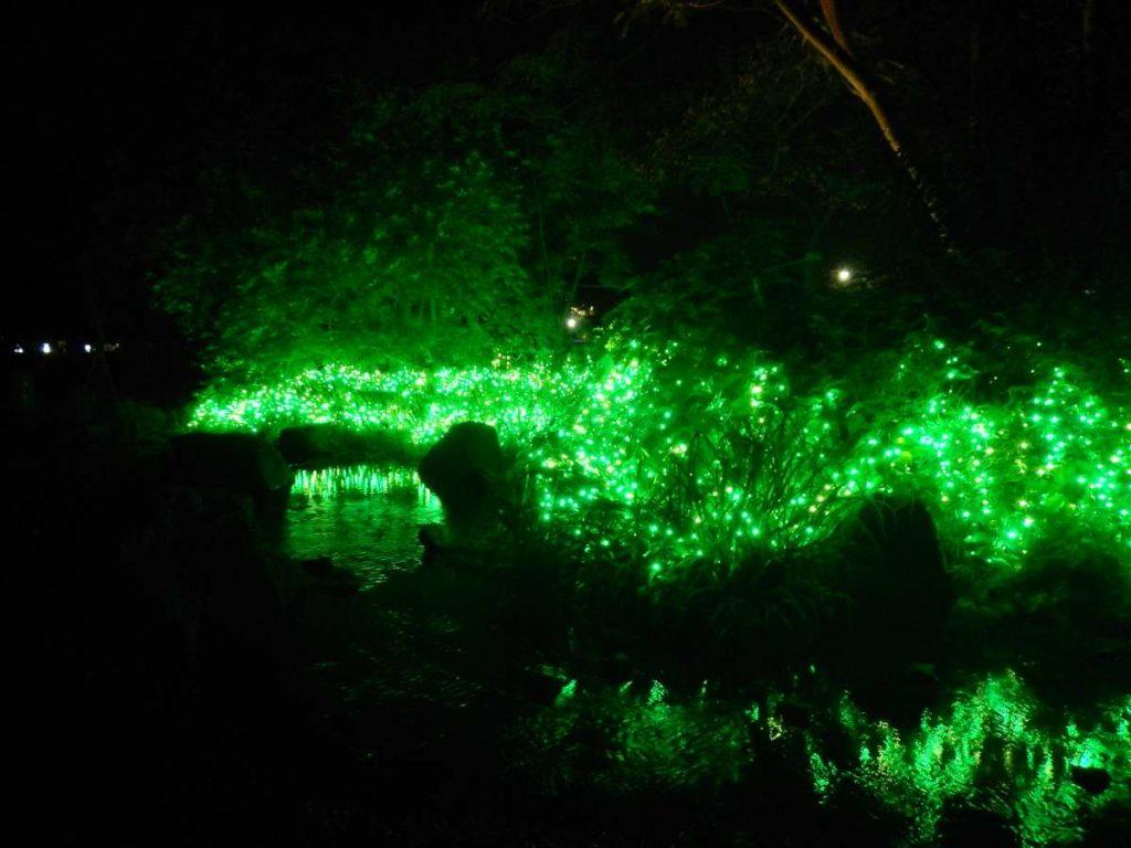緑のイルミネーション