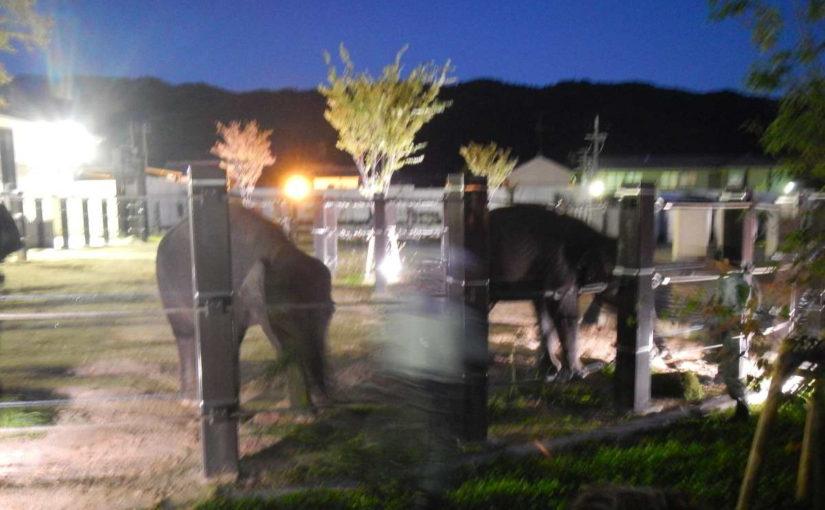 京都市動物園夜ゾウ