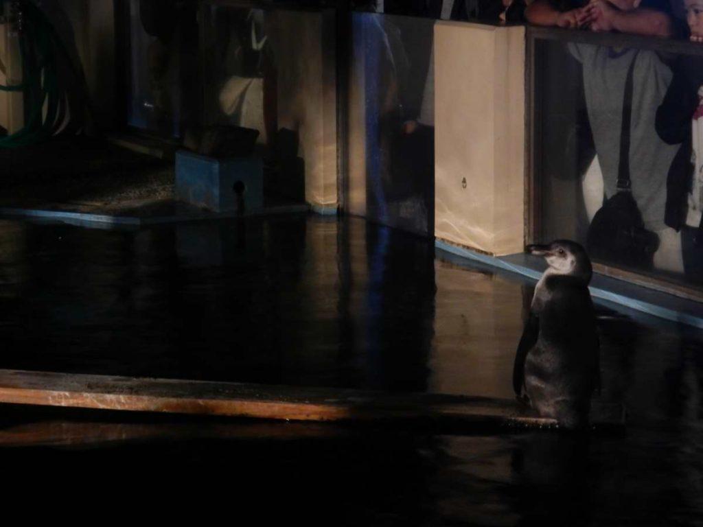夜のペンギン