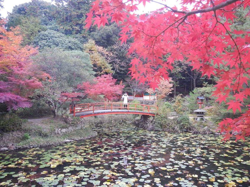 大原野神社紅葉