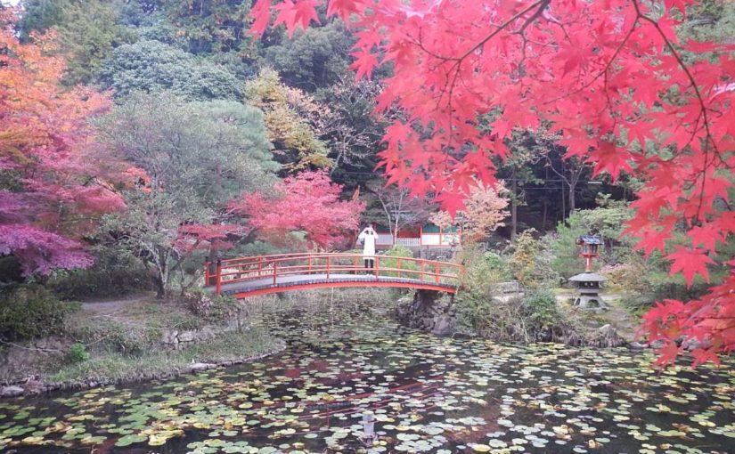 紅葉の大原野神社へ(京都市西京区) まだ綺麗になりそうだ