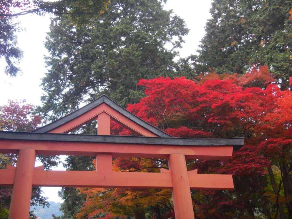 日吉大社山王鳥居と紅葉