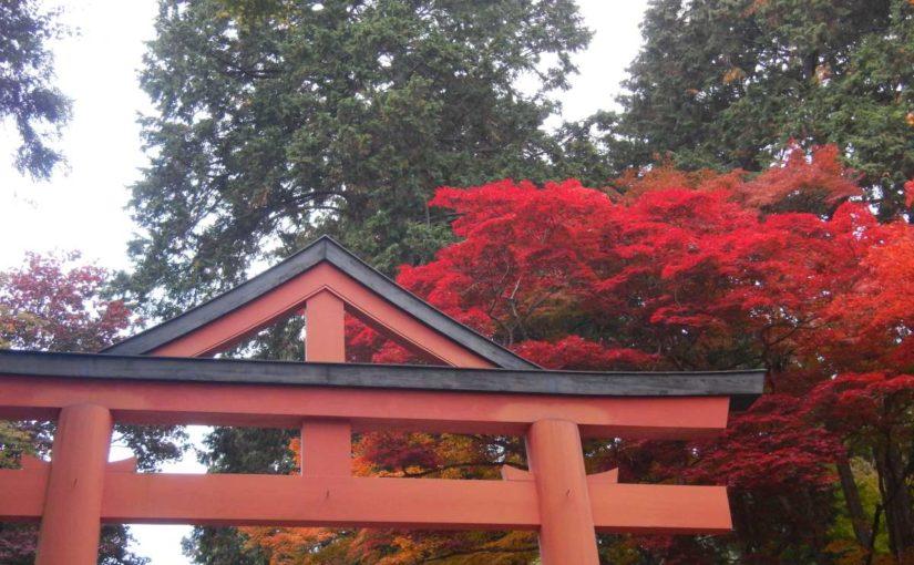 ライトアップ中!紅葉の日吉大社へ(滋賀県大津市)神輿がすごい!