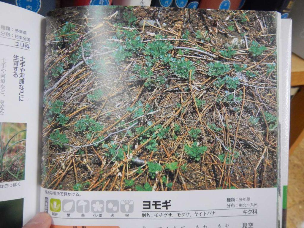 ヨモギ図鑑