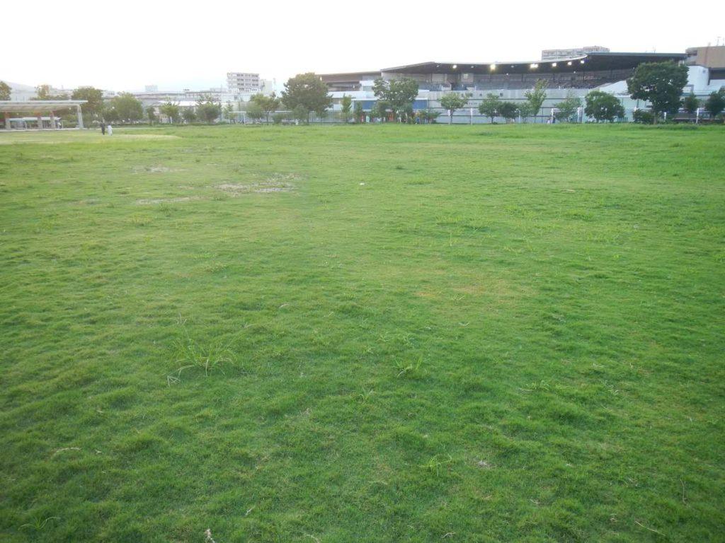 梅小路公園芝生
