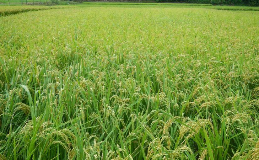 私的活動にも農業のような視点が必要では?