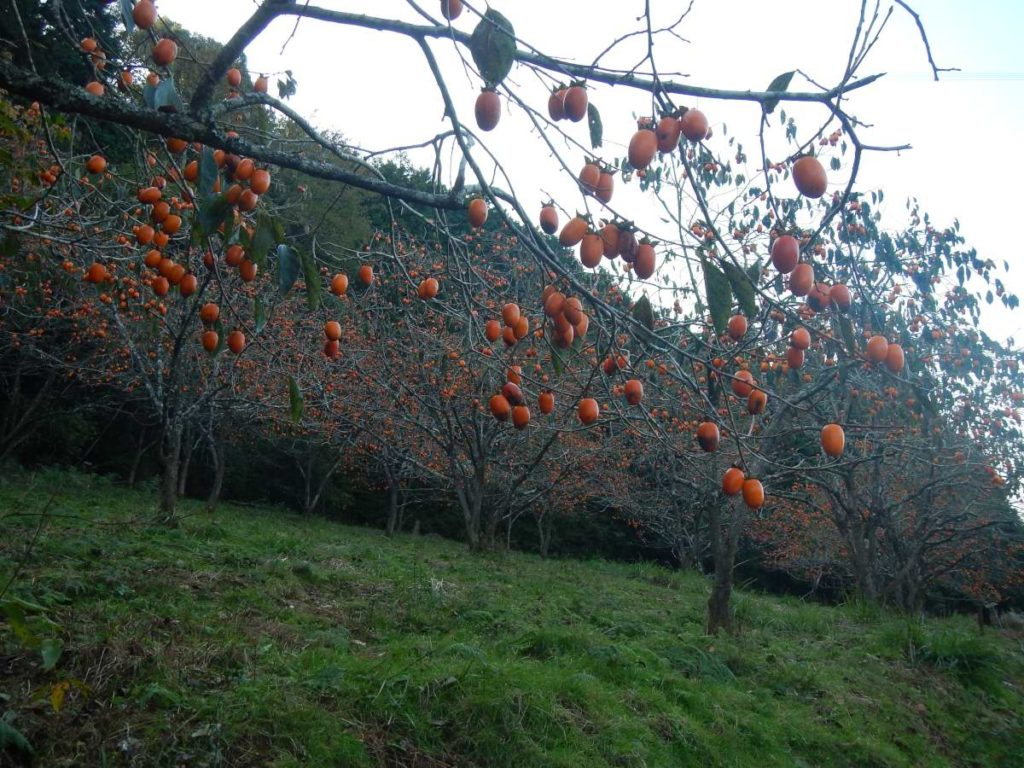 鶴子の柿ハロウィン