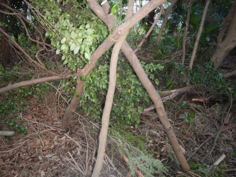 木でトライポッド