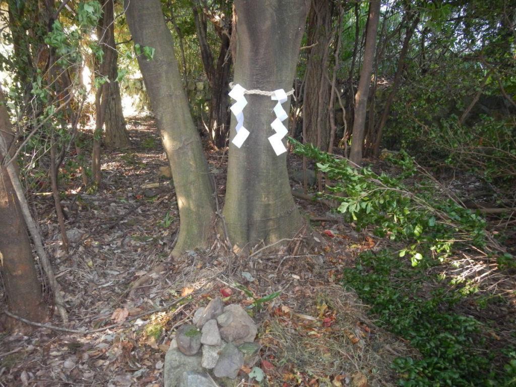 謎の土地のご神木