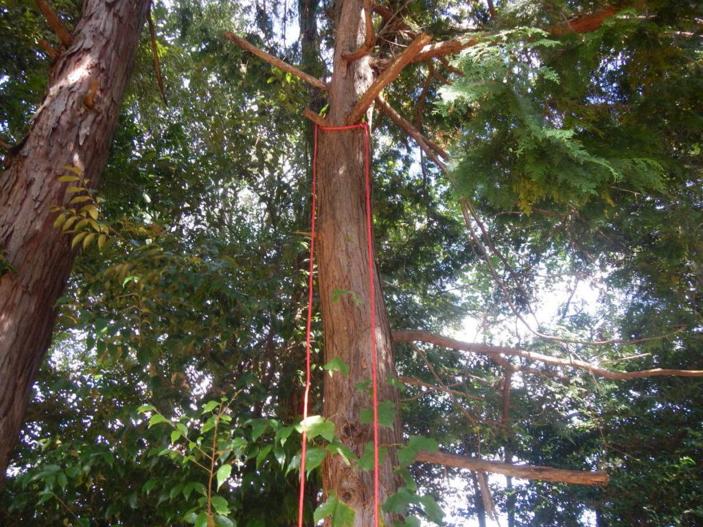 木登りロープ