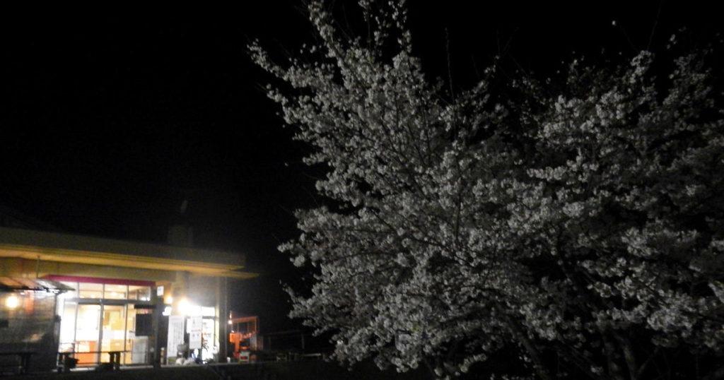 夜桜と比良とぴあ